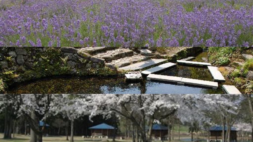 美郷町のイメージ(ラベンダー園(千畑)、御台所清水(六郷)、雁の里山本公園(仙南))